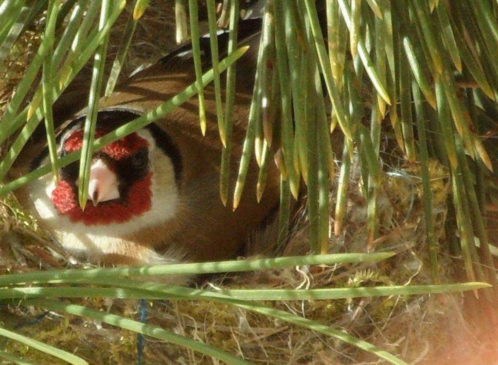 Vogel_im Nest